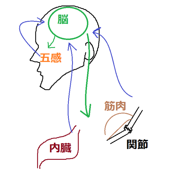 体 脳・神経 コントロール